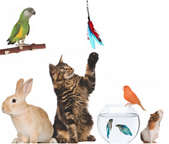 We love cats and small animals as well! Let our Professionals visit your cat or small animal to make sure they have enough food, water and the attention they deserve! From cats, rabbits, hamsters, pigs, birds, fish and everything in between, let us take care of your little ones!